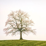 Uncompromising Faith Roots The Tree
